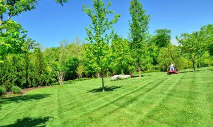 lawn-care-643558_1920